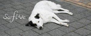 Hundehaftpflicht, SaFiVe, Marie Christina Schröders, Versicherungen, Aschaffenburg