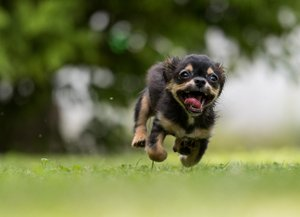 hundehalterhaftpflicht beckum
