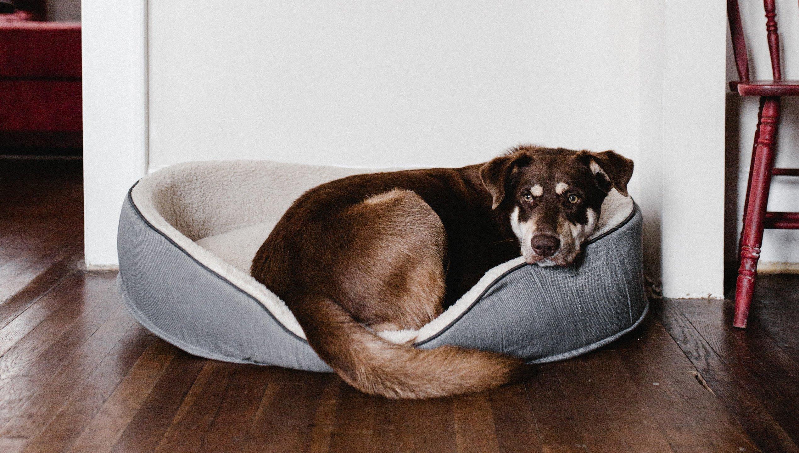 Hundehaftpflichtversicherung Schadensfall