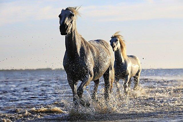 Pferdehalterhaftpflicht vergleichen